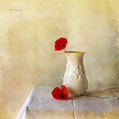 poppies still life
