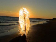 Sunset behind feather