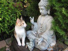 Buddha and cat I Love Cats, Crazy Cats, Cool Cats, Baby Animals, Funny Animals, Cute Animals, Buddha, Mother Cat, Jolie Photo