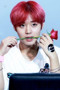 박지훈 워너원 Park Jihoon Wanna One Kpop, Beautiful Eyes, Red Hair, Park, Produce 101, Guan Lin, Seasons, Random, Twitter