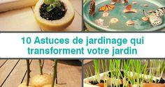 10-astuces-de-jardinage-qui-transforment-votre-jardin