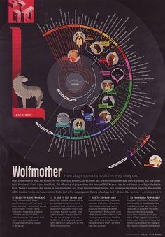 """""""Wolfmother How Dogs Came to Look the Way They Do""""  Looking at the illustration style of the dogs. I really like it."""