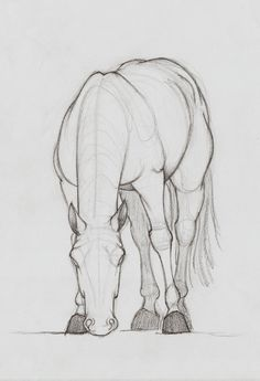 ArtStation - Horse Sketches, Ozan ÜNLÜ