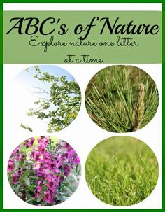 School Time Snippets: ABC's of Nature  #science