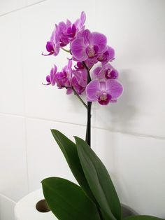I love orchids! They last so long and they always look so beautiful. Always a winner.