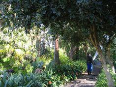 Kasvitieteellinen puutarha La Pazin alueella. Jardín Botanico, Puerto de la Cruz