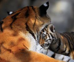 Love you Mom! by Klaus Wiese, via 500px