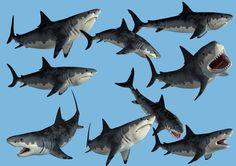 9 Monster Shark Stock PNG's by Roys-Art