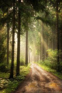 Path Of Dreams by Marco Heisler