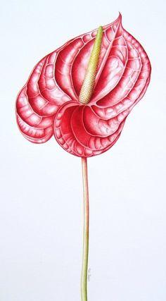 annie hughes botanical artist - Google zoeken