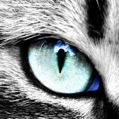 Cats Eye by MichaelHoey on DeviantArt