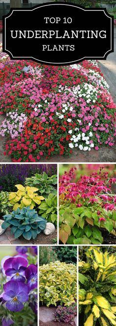 Garden Landscaping It's not true that you can't have a lush garden under tree's - Underplanting is an essential part of gardening and landscaping. The basic thing to understand about underplanting is that choosing the right plants is Garden Shrubs, Lush Garden, Shade Garden, Dream Garden, Lawn And Garden, Garden Plants, Organic Gardening, Gardening Tips, Container Gardening