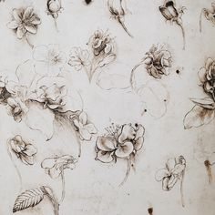 """470 Likes, 5 Comments - rudy 〰 (@wildeandrose) on Instagram: """"study of a lily 