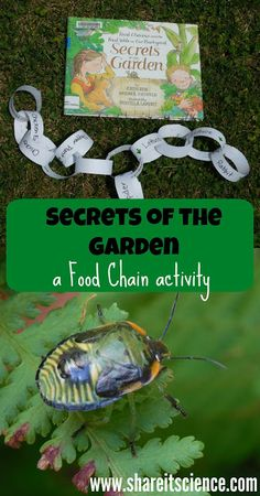 Share it! Science News : Secrets of the Garden: A Food Chain Activity