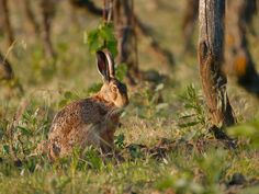 Always observant - Mr. Lamprecht resting in the wine garden. Vineyard, Wine, Garden, Animals, Garten, Animales, Animaux, Vine Yard, Lawn And Garden