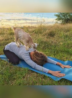 This Relaxing New Yoga Class Is Full of . . . Goats?!