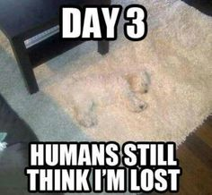 Where's the dog?!