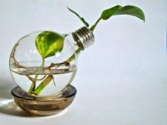 Repurposed Lightbulb Light Bulb Vase with Live by eGardenStudio, $17.00
