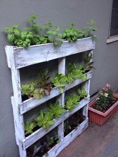 Pallet vertical garden in San Diego, CA (sells for $125)