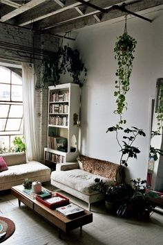 The hanging plants. <3