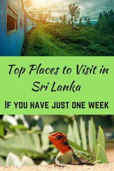 Are you looking for best places to visit in Sri Lanka, top places to see, attractions to visit and Sri Lanka's historic and natural sights - if you have only ONE week at hand? Well, here is my pick of best tourist places in Sri Lanka to be covered on a one week itinerary.