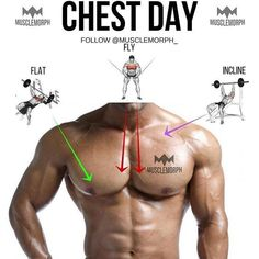 "Chest day ➖ Main chest muscle Pec major 2 ""heads"", upper (clavicular head) and lower (sternal head). The upper head's fibres run downwards ⬇️ as they are attached to the clavicle with the mid fibres running horizontally ⬅️ (because they attach to the ce Weekly Workout Plans, Gym Workout Tips, Weight Training Workouts, Week Workout, Fitness Motivation, Morning Motivation, Motivation Quotes, Motivation Inspiration, Chest Muscles"