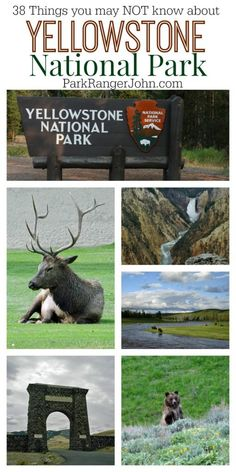 National Park Facts 38 things you don't know about Yellowstone National Park! Facts, Figures and more about the US National things you don't know about Yellowstone National Park! Facts, Figures and more about the US National Park! Yellowstone National Park Facts, Visit Yellowstone, Yellowstone Vacation, Yellowstone Camping, Us National Parks, Grand Teton National Park, Wyoming Vacation, Yellowstone Nationalpark, Las Vegas