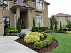 front entrance evergreen landscaping green and purple - Google Search