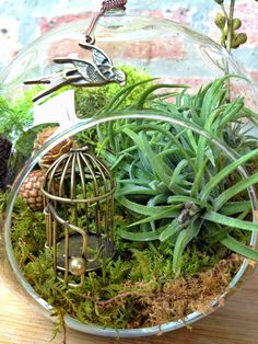 Swallow and Bird Cage Air Plant Terrarium - A Perfect Birthday or Housewarming Gift. $29.00, via Etsy.