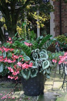 Container for Shade - very interesting greens with one bright pink flower