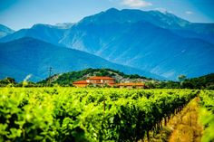 """By Tika Bujiashvili   """"Awineryis a building or property that produces wine, or a business involved in the production of wine, such as a wine company.""""   Kakheti is the most important region for winemaking,characterized by its unique vine grape varieties, well suited climate and centuries of exceptional winemaking experience. In the heart of Kakheti, near..."""
