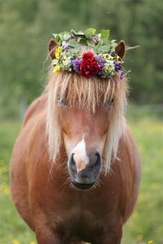A brown horse wearing a floral crown.