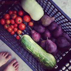 Harvest of 2015