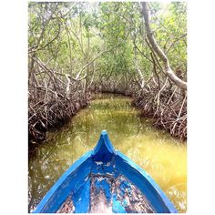 floating through the mangroves Cartagena Colombia | day 2
