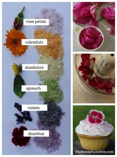 How to make naturally colored decorating sugar with edible flowers & cane sugar. If you're sugar free - use unsweetened coconut flakes instead. Comidas Light, Natural Food Coloring, Flower Food, Edible Plants, Edible Garden, Edible Art, Organic Recipes, Eat Cake, Food Art