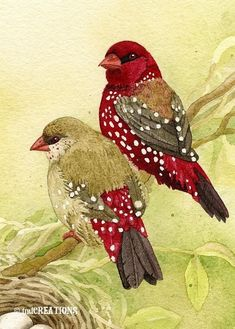 Love finches