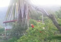 Nothing like waking up in the jungle, looking out your window and seeing a beautiful wild scarlet macaw right there. This view is right out out the window of our shower in the front facing side of the Bungalow at Tucan Calvo in Jaco Costa Rica. #BungalowTucanCalvo #AltaVistaTucanCalvo #Jaco #CostaRica #CheckOutOurHome #Casa #Bungalow #Wildlife #ScarletMacaw #Travel #Expats #LivingAbroad #CarpeDoin #Couple #CenteralAmerica