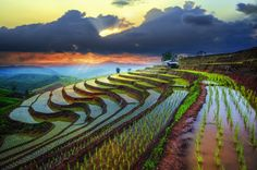 Rice filed of terraces in Chiangmai by Tetra on 500px Pabongpiang rice filed @ Mae Jam, Chiangmai Thailand