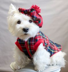 Terrifically Tartan by sewmoira Team by Moira Lawrance on Etsy Fantastic collection from bunting, brooches and bags to the CUTEST little doggie outfits! Westies, Tartan Christmas, Pet Dogs, Doggies, West Highland Terrier, White Terrier, Cute Puppies, Westie Puppies, Dog Coats