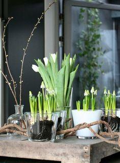 fleaingfrance:  Floral bulbs on display….en masse
