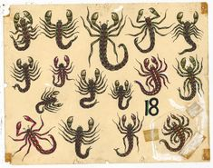 From Ricco/Maresca Gallery, Rosie Camanga, Untitled (Scorpions) Ink on Paper, 11 × 14 in Traditional Tattoo Reference, Traditional Tattoo Old School, Traditional Tattoo Design, Retro Tattoos, Old Tattoos, Traditional Tattoo Flash, Neo Traditional, American Traditional, Bug Tattoo