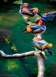 Ornithology Message Board - Msg: 28283581