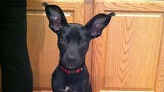 I Don't Care What They Say, These 8 Dogs Have the Most Awesome Ears Ever!