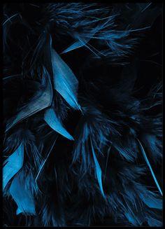 Blue feathers, plakat i gruppen Plakater og posters / Størrelser / 30x40cm hos Desenio AB (8483)