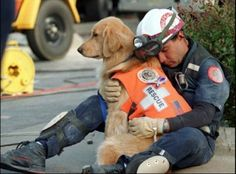 Dogs help our rescue teams and help save lives.  GOLDEN RETRIEVER