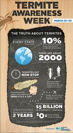 Infographic of interesting facts about termites