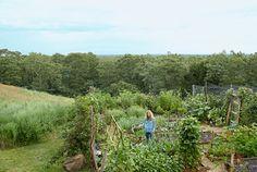 Martha's Vineyard Kitchen Garden - Jules Bernstein and Linda Lipsett Home Tour