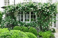 New Dawn Rose, trellis, boxwood; by P. Allen Smith & Associates