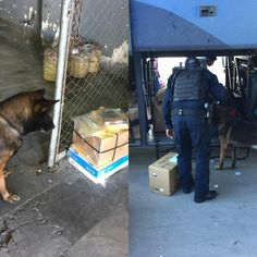Halla Policía Federal en la Central Camionera 10 gramos de cristal ocultos en libro que fue enviado desde Cuernavaca | El Puntero