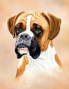 How To Draw A Boxer Dog using Pastel Pencils: http://www.colinbradleyart.co.uk/home/sign-up/